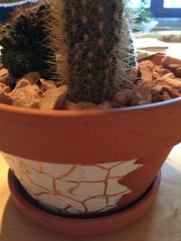 cactus bloempot3