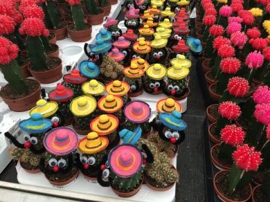 Mexicano Cactussen