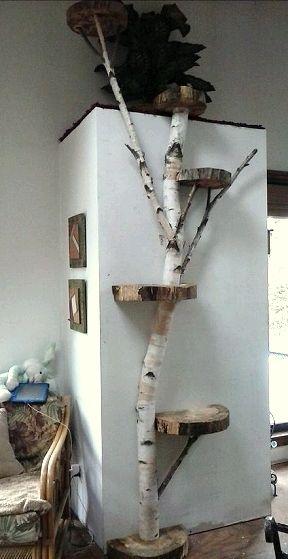 Een decoratieve klim boom in uw huis